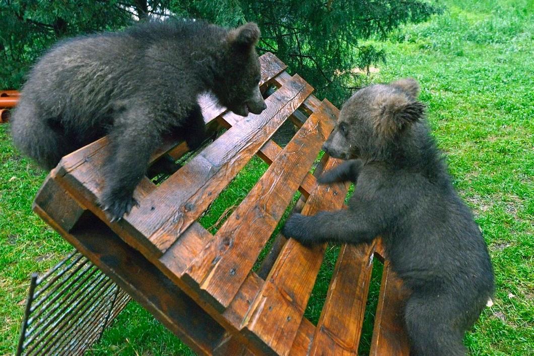 zhivotzaiyun 25 Лучшие фотографии животных со всего мира за неделю