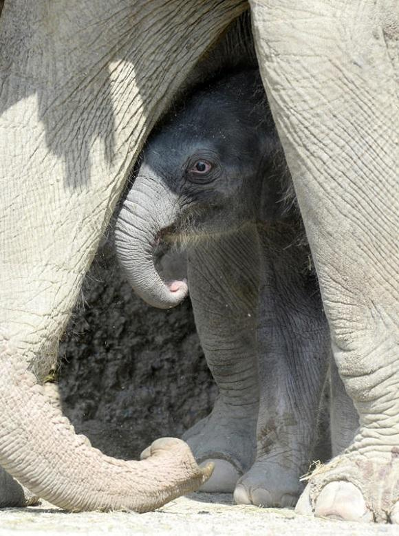 zhivotzaiyun 6 Лучшие фотографии животных со всего мира за неделю