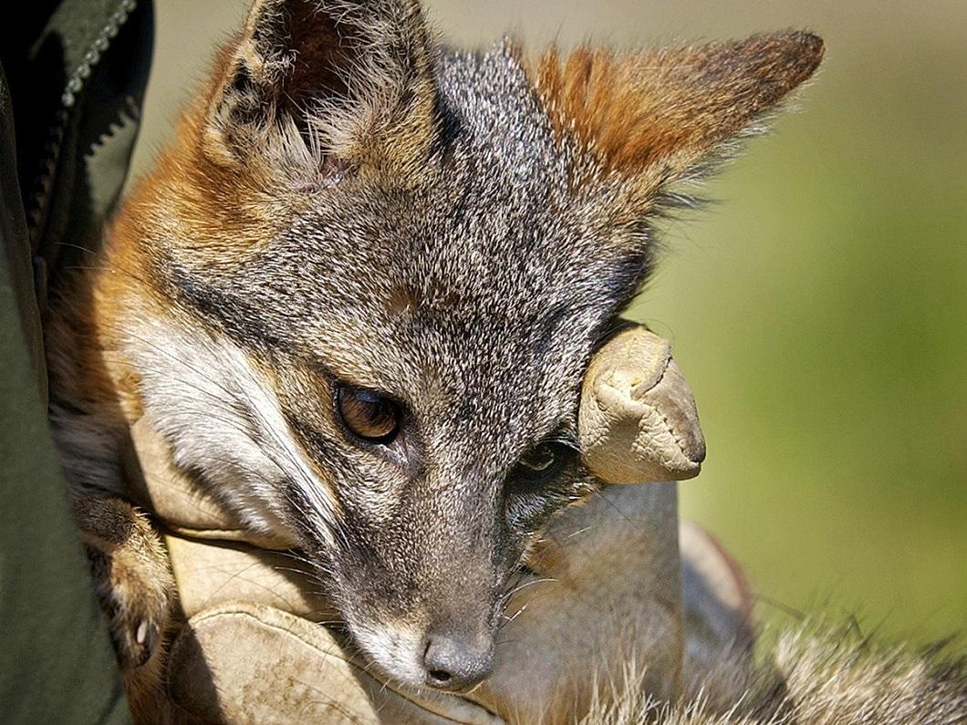 zhivotzaiyun 8 Лучшие фотографии животных со всего мира за неделю