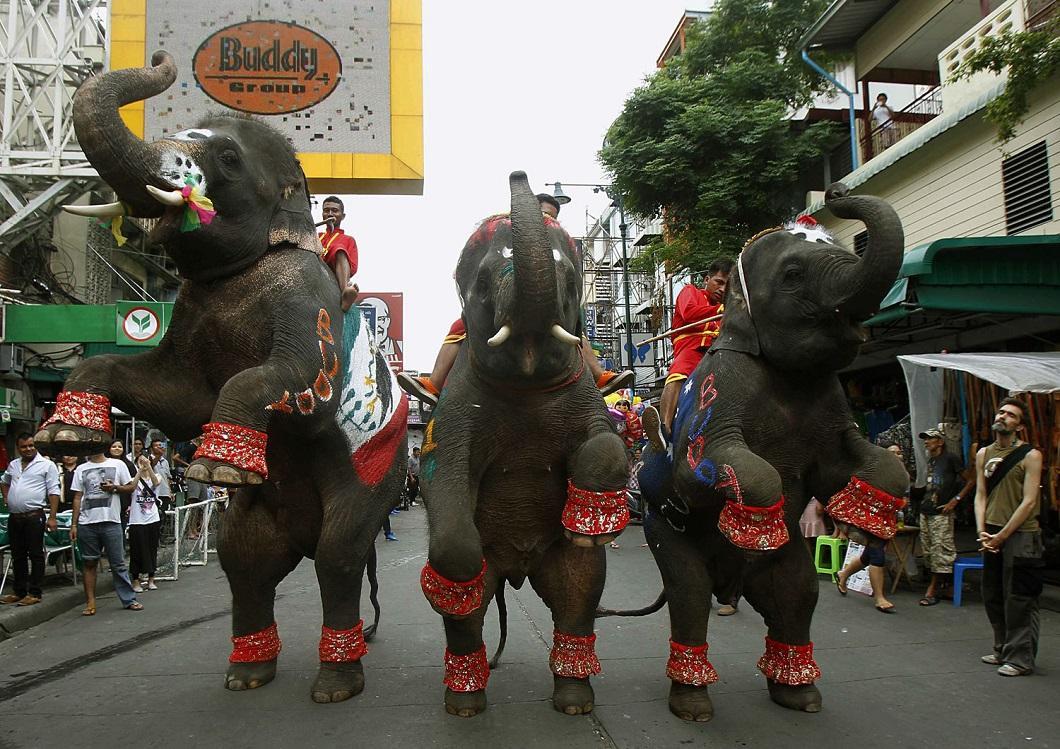 zhivotzaiyun 9 Лучшие фотографии животных со всего мира за неделю