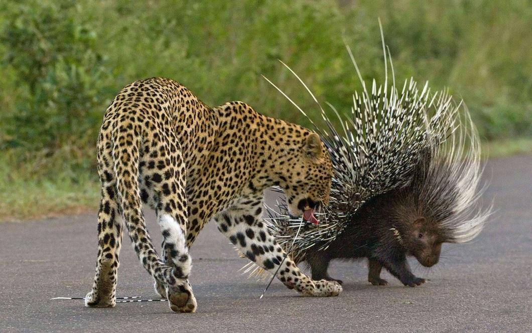zivotnye za mai 2014 1 ned 18 Лучшие фотографии животных со всего мира за неделю