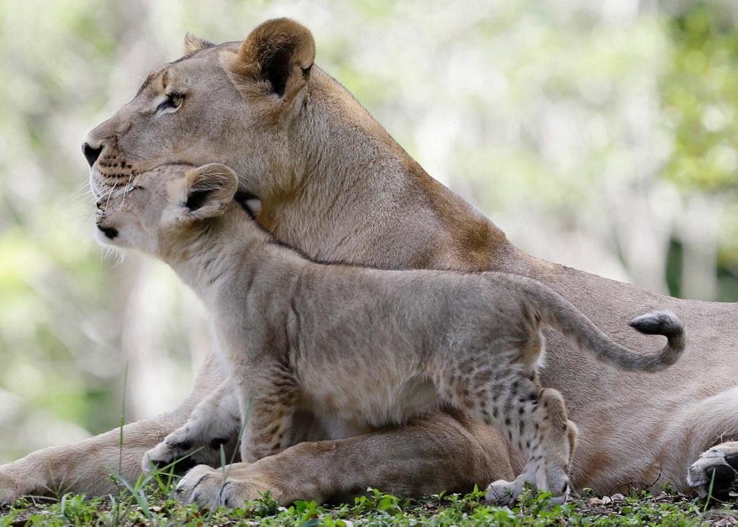 Картинки животных мам и детей