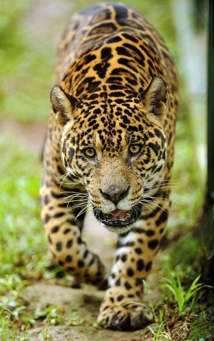 zivotnye za mai 2014 1 ned 9 Лучшие фотографии животных со всего мира за неделю
