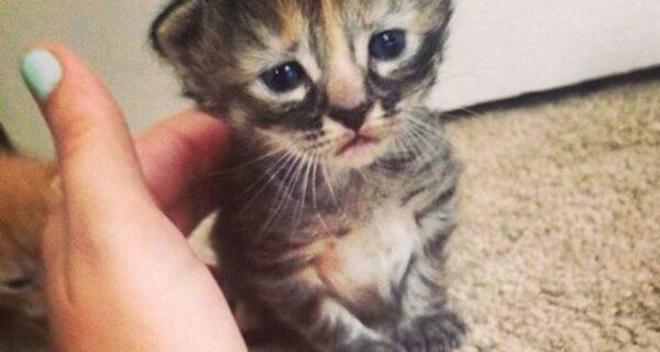 Муррманентно — самый грустный котенок