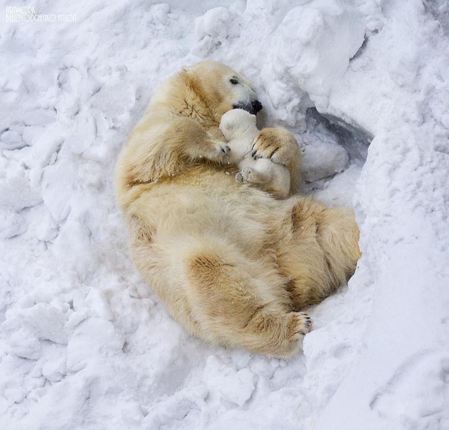http://bigpicture.ru/wp-content/uploads/2014/07/animalparents02.jpg