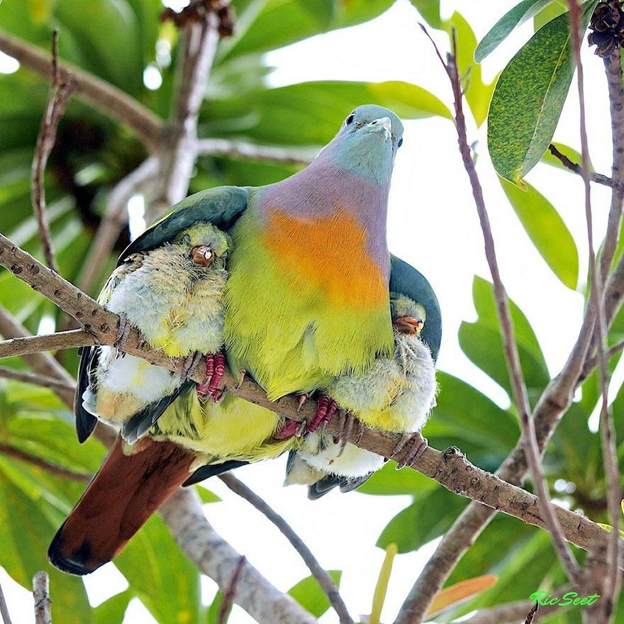 animalparents06 Эти животные научат быть хорошими родителями
