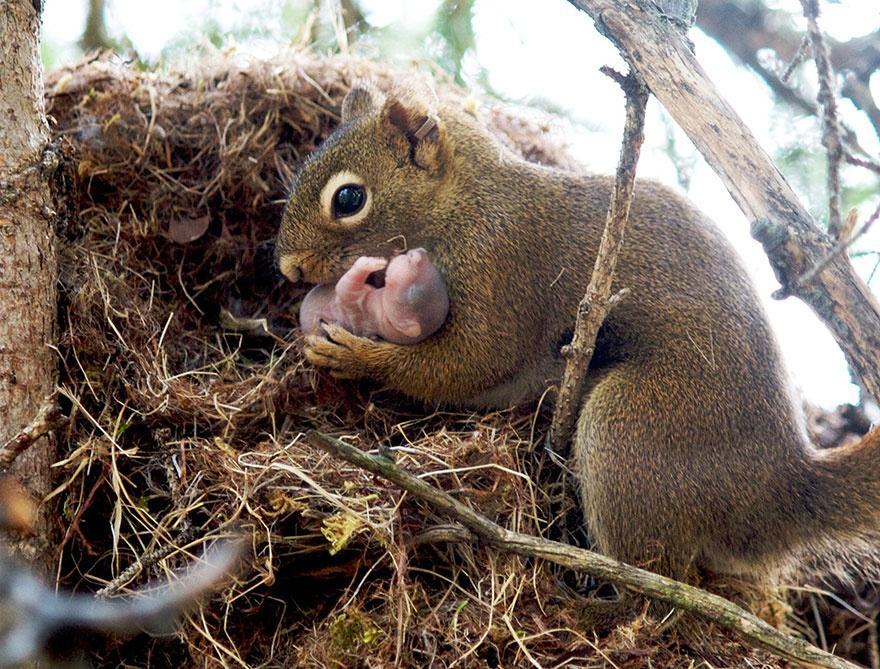 animalparents07 Эти животные научат быть хорошими родителями