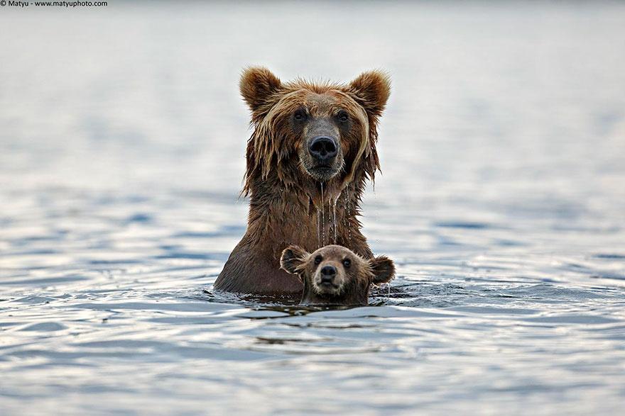 animalparents08 Эти животные научат быть хорошими родителями