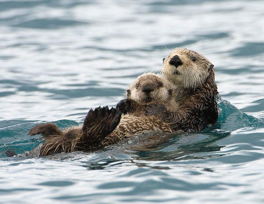 animalparents12 Эти животные научат быть хорошими родителями