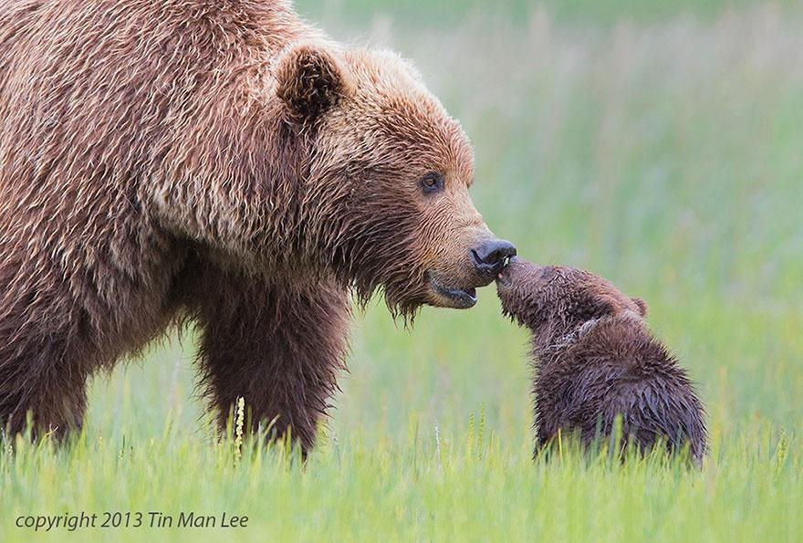 animalparents14 Эти животные научат быть хорошими родителями