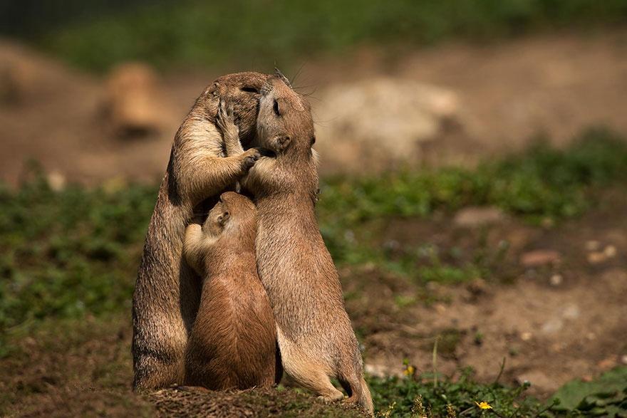animalparents16 Эти животные научат быть хорошими родителями