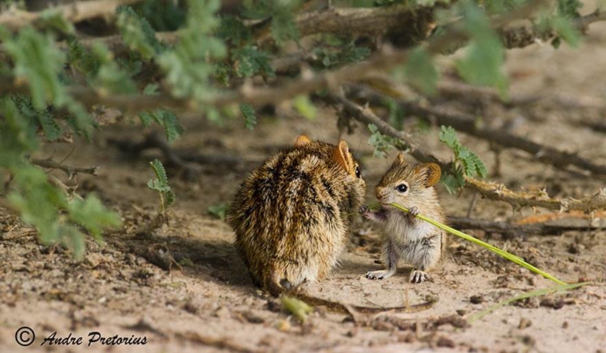 animalparents20 Эти животные научат быть хорошими родителями