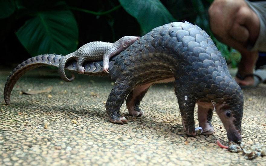 http://bigpicture.ru/wp-content/uploads/2014/07/animalparents22.jpg