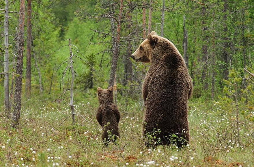 animalparents25 Эти животные научат быть хорошими родителями