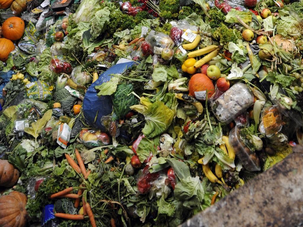 decomposition02 Сроки разложения мусора в фотографиях