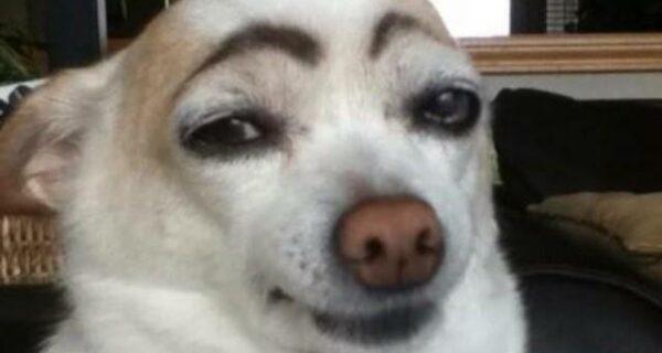 Собаки с бровями покоряют интернет