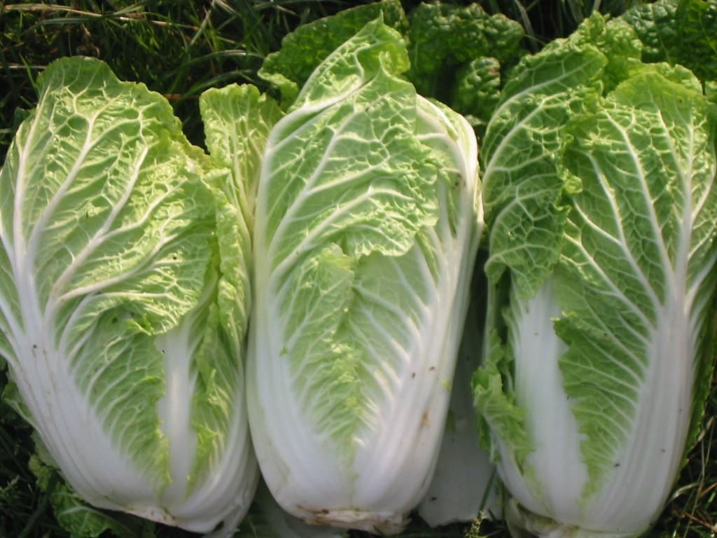 healthierfood11 Самые полезные продукты для организма