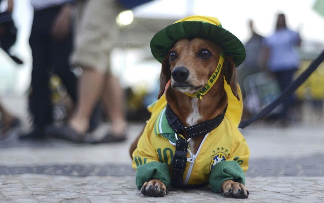 luchshie foto zhivotnyx 121 Лучшие фотографии животных со всего мира за неделю