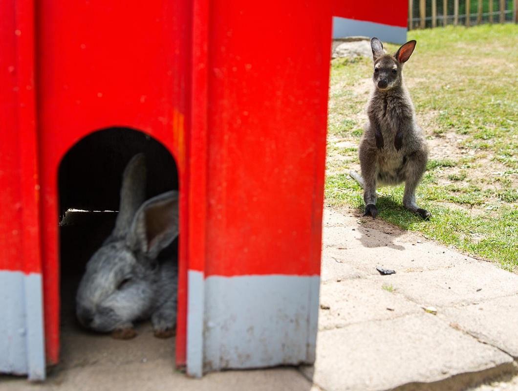 luchshie foto zhivotnyx 15 Лучшие фотографии животных со всего мира за неделю
