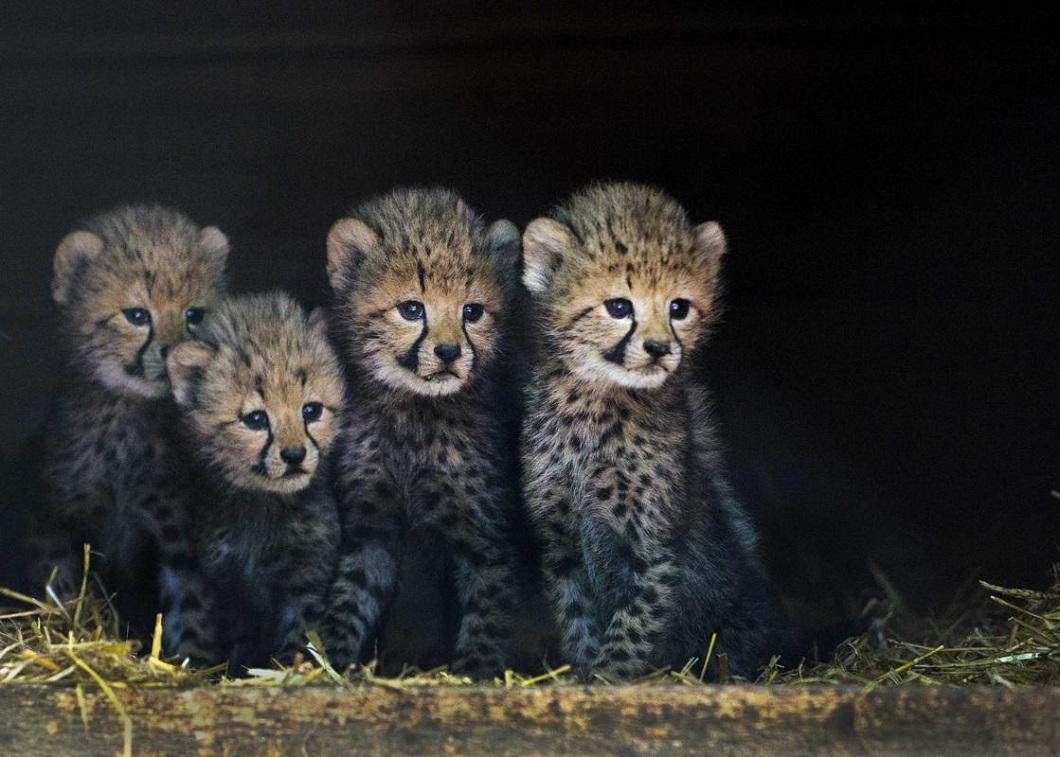luchshie foto zhivotnyx 16 Лучшие фотографии животных со всего мира за неделю
