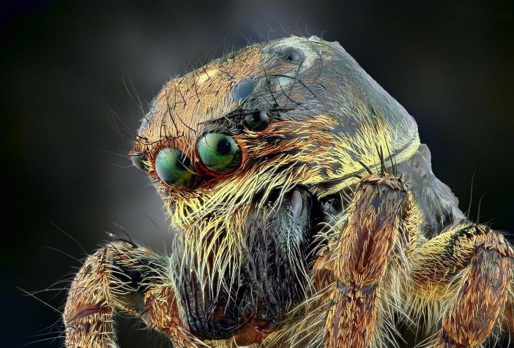 Классные картинки пауков, дневники