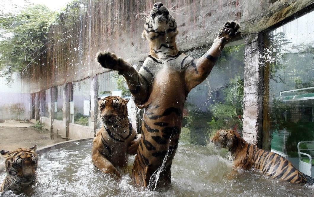 luchshie foto zhivotnyx 21 Лучшие фотографии животных со всего мира за неделю