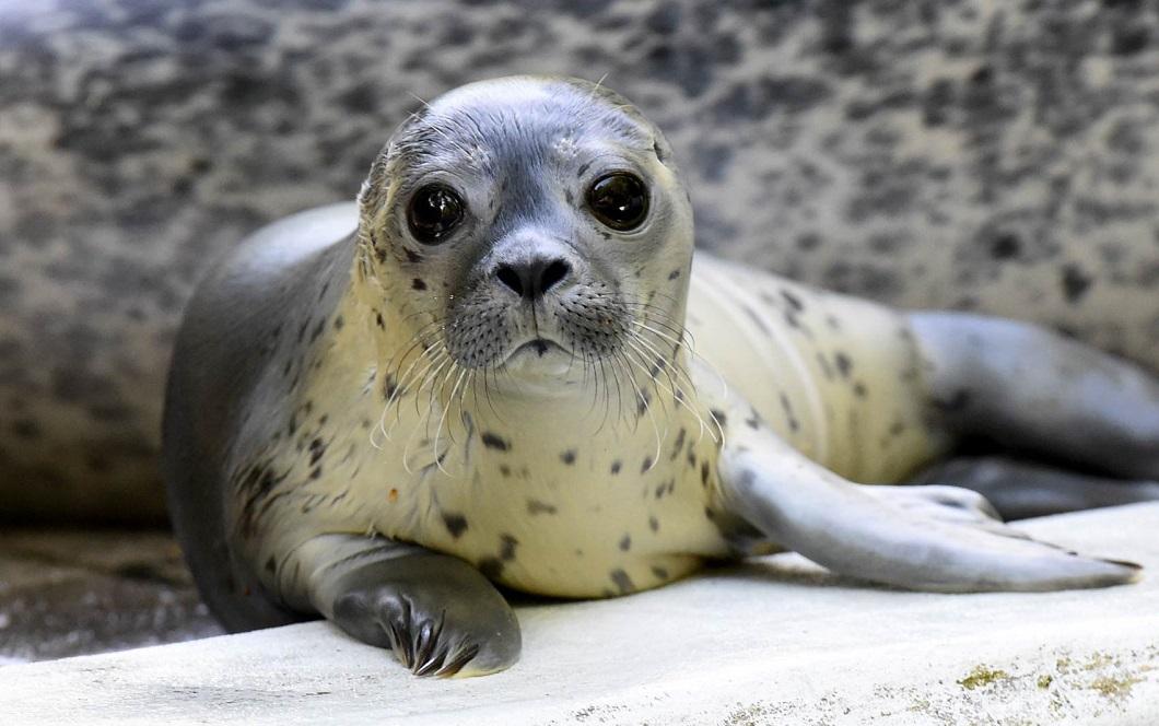 luchshie foto zhivotnyx 31 Лучшие фотографии животных со всего мира за неделю