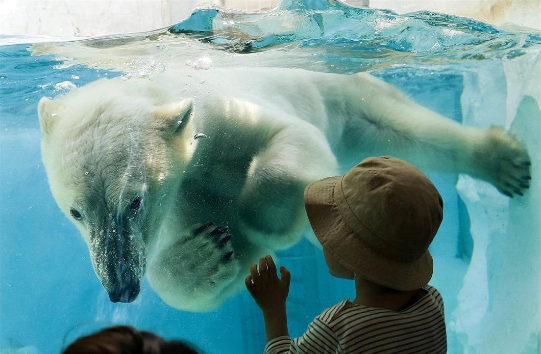 luchshie foto zhivotnyx 4 Лучшие фотографии животных со всего мира за неделю