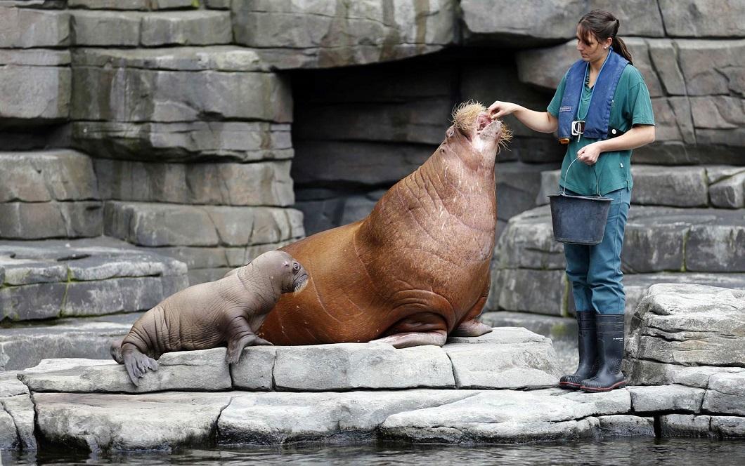 luchshie foto zhivotnyx 6 Лучшие фотографии животных со всего мира за неделю
