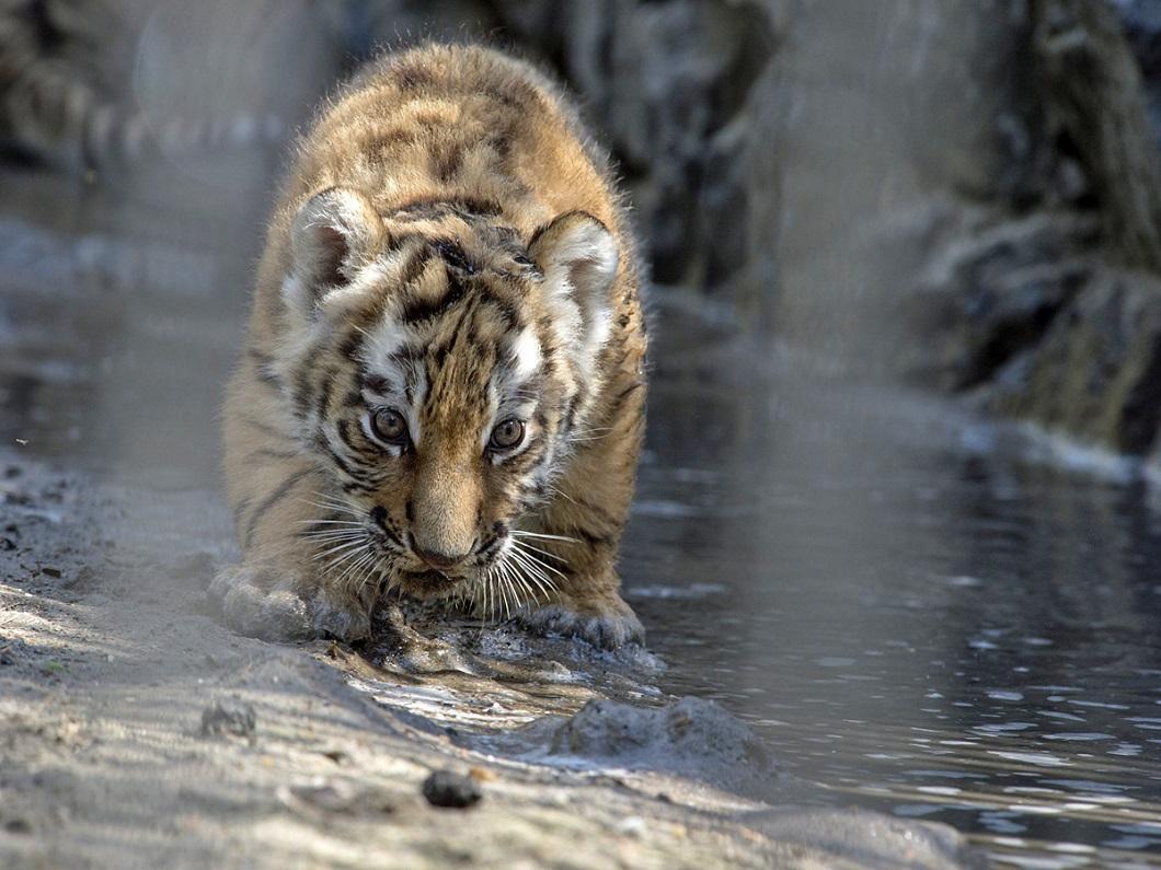 luchshie foto zhivotnyx 61 Лучшие фотографии животных со всего мира за неделю