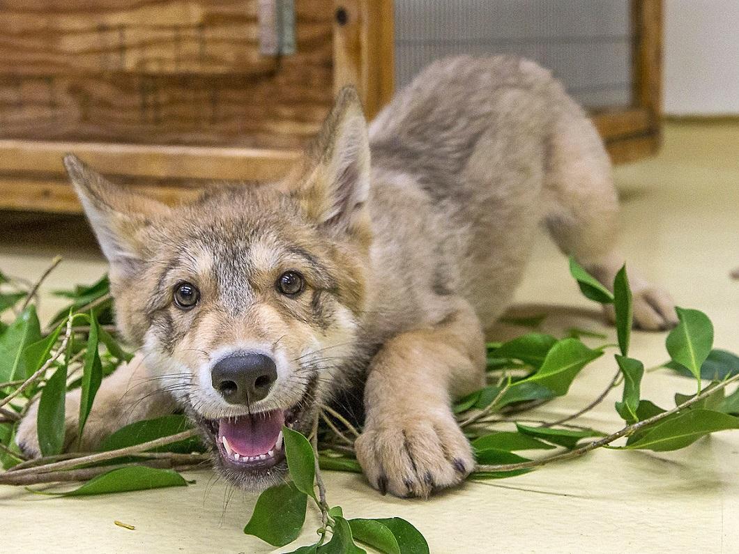 luchshie foto zhivotnyx 8 Лучшие фотографии животных со всего мира за неделю