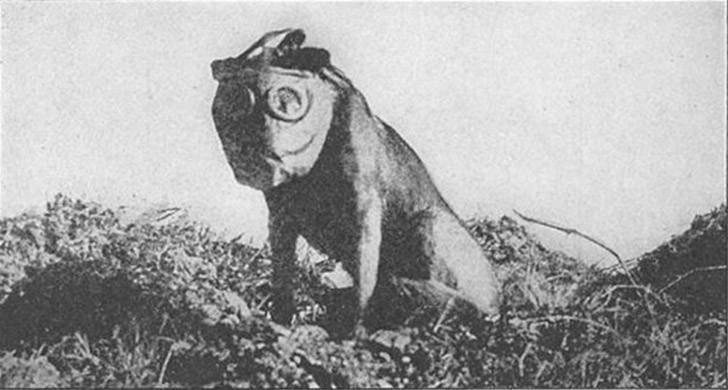 sgtstabby06 Сержант Стабби – героический пес Первой мировой войны