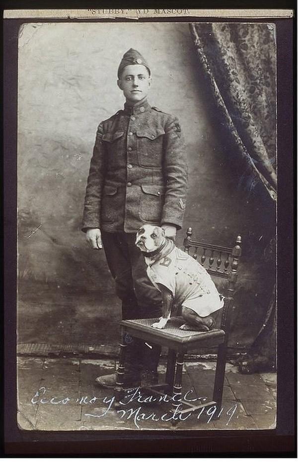sgtstabby09 Сержант Стабби – героический пес Первой мировой войны