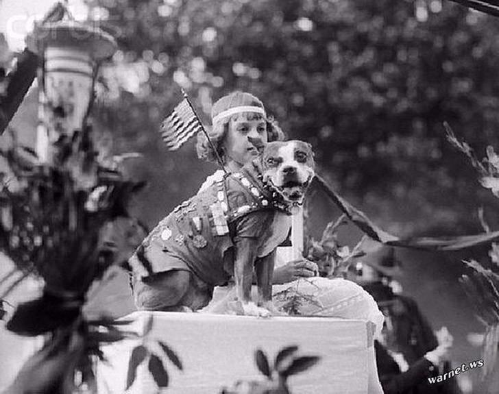 sgtstabby11 Сержант Стабби – героический пес Первой мировой войны