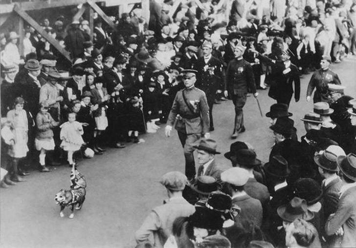 sgtstabby13 Сержант Стабби – героический пес Первой мировой войны