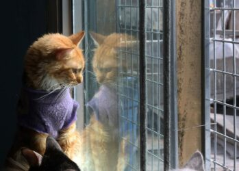 catshouse01
