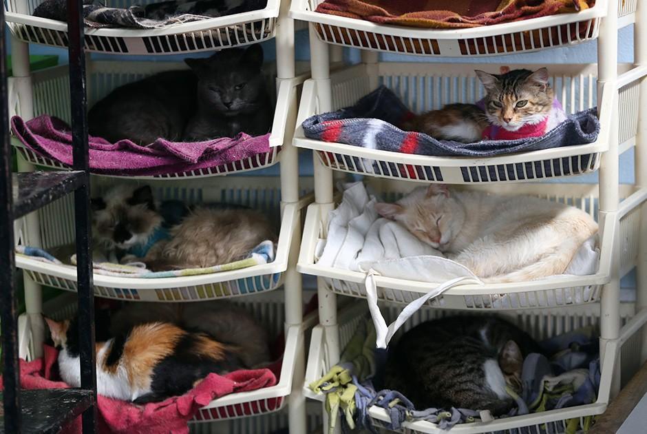 Где взять с питомника кошку домой