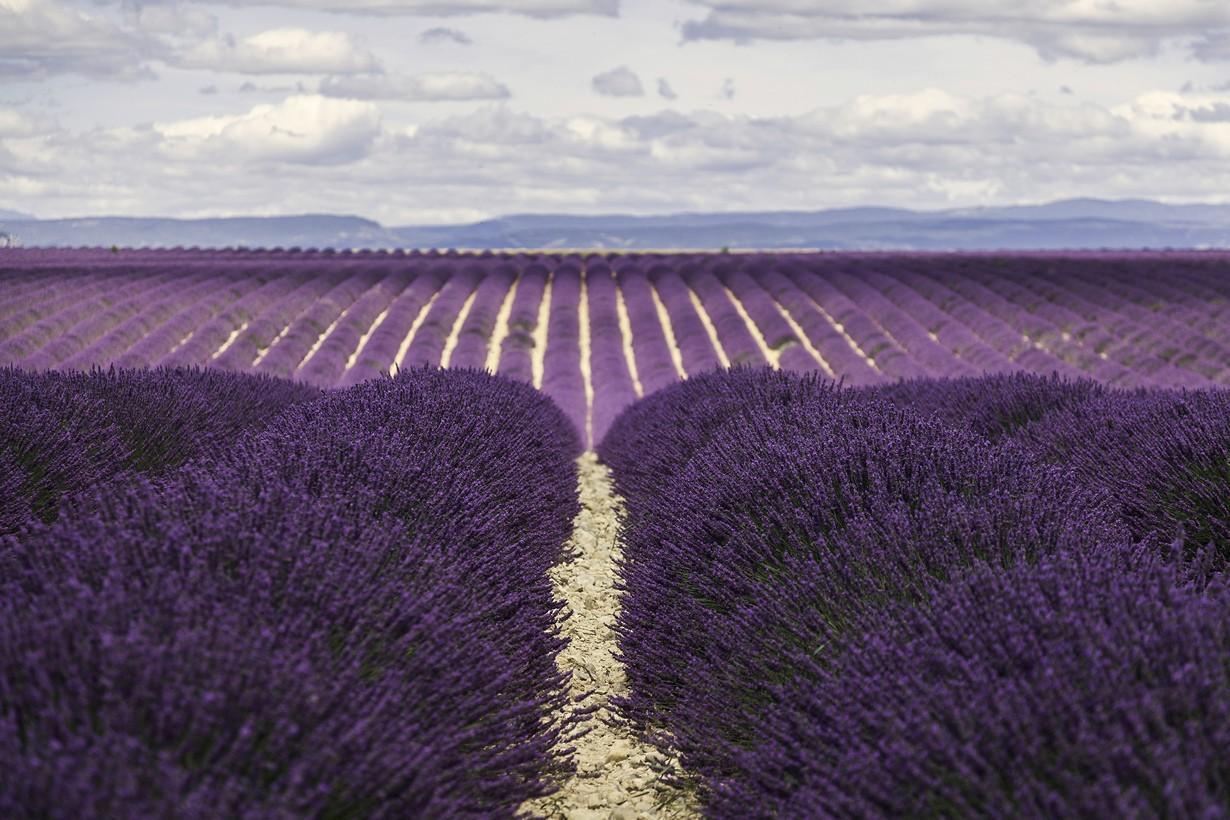 exhalefragrance01 Путешествие по самому благоухающему региону Франции