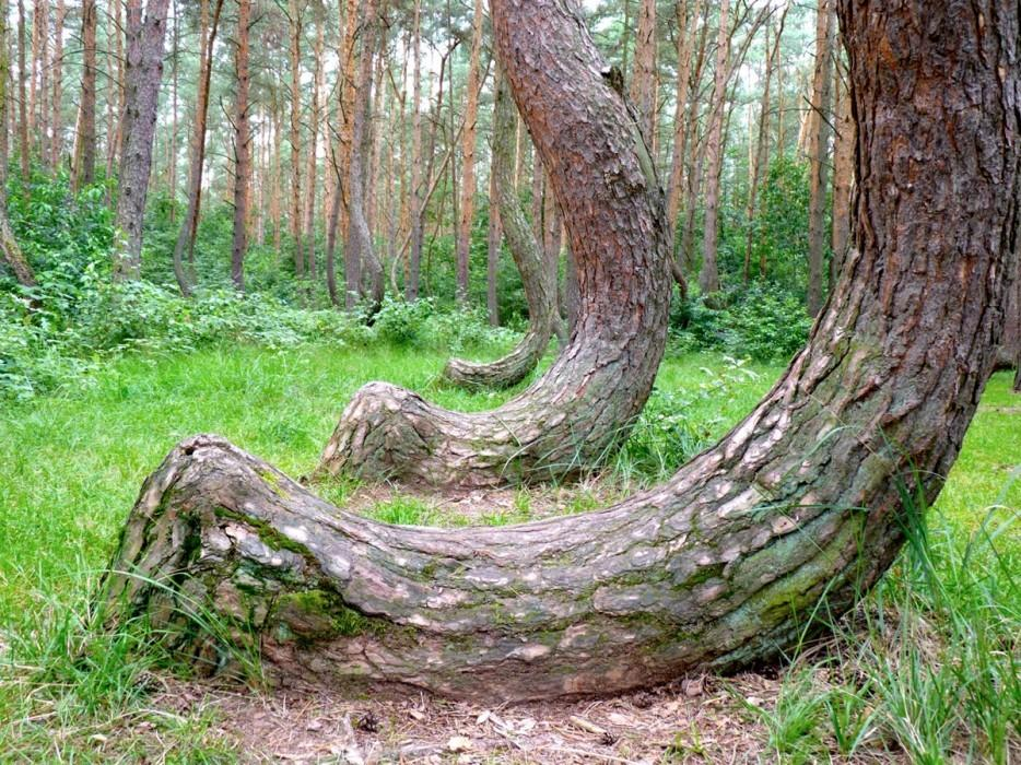 forests02 Леса с другой планеты!