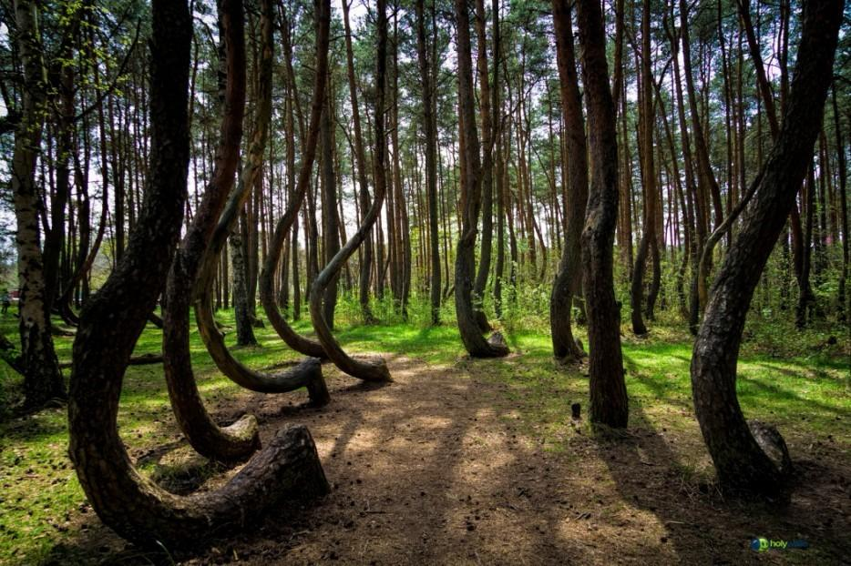 forests03 Леса с другой планеты!