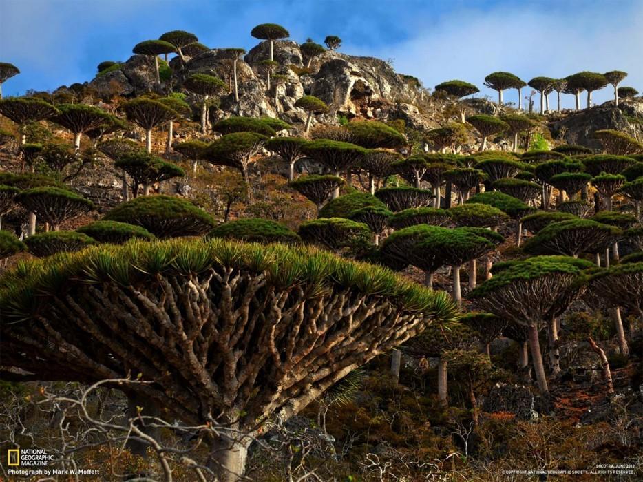 forests10 Леса с другой планеты!