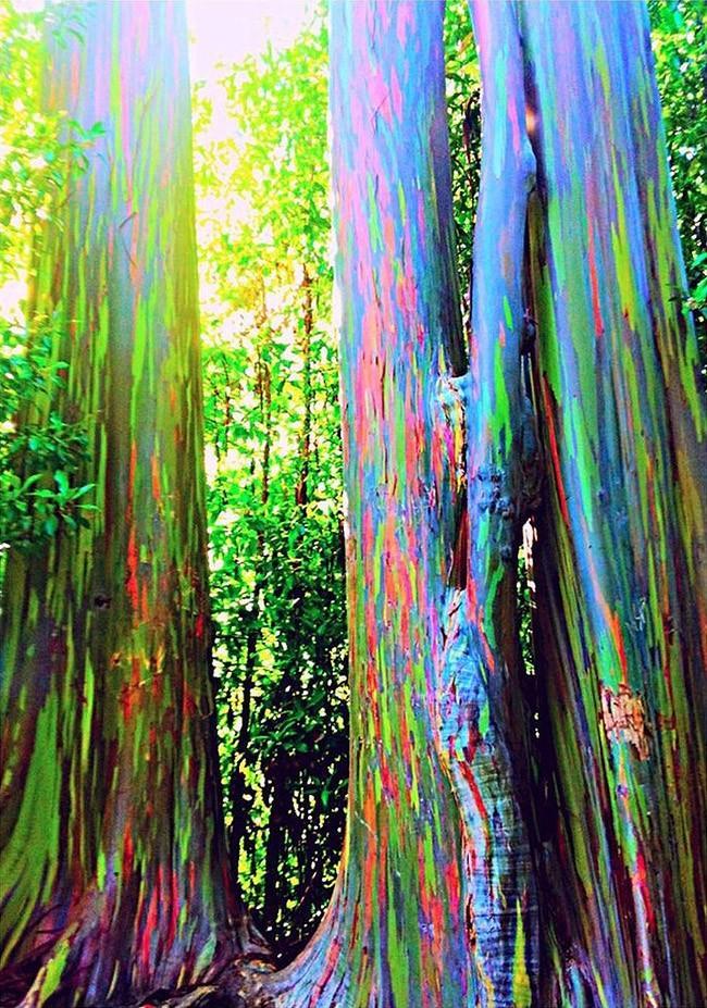 forests13 Леса с другой планеты!