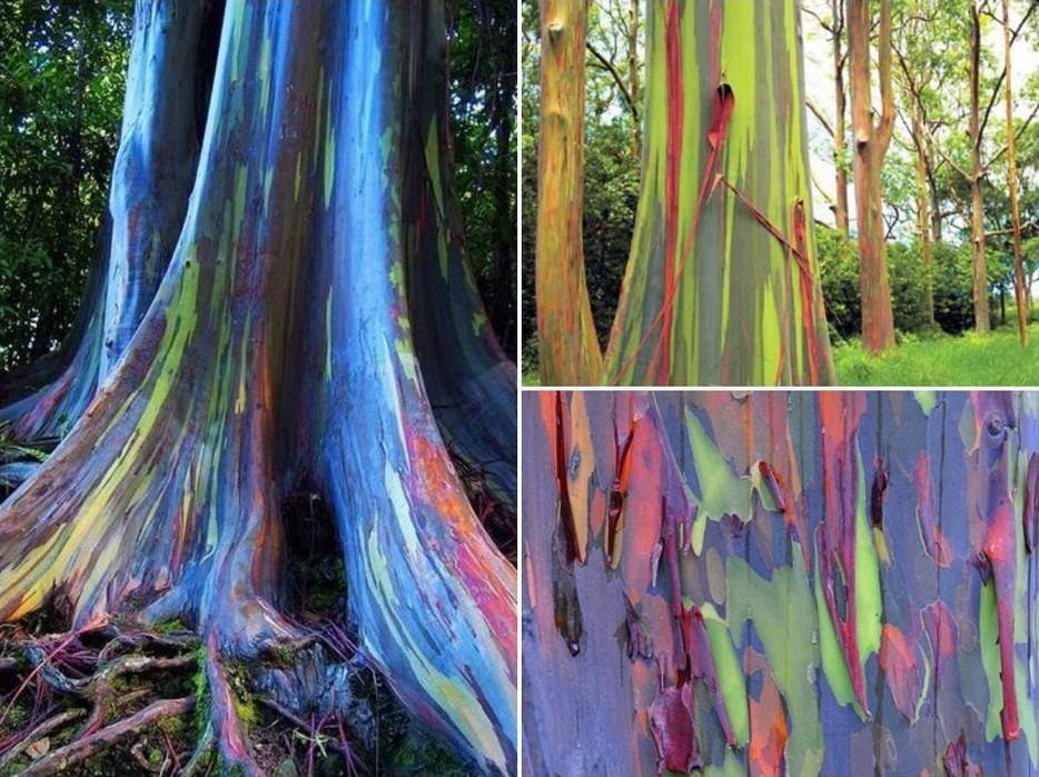 forests15 Леса с другой планеты!