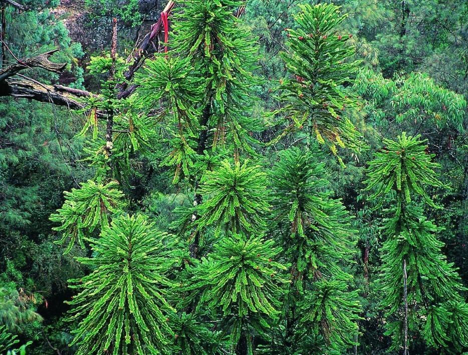 forests29 Леса с другой планеты!