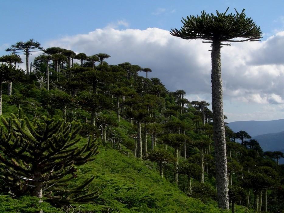 forests34 Леса с другой планеты!
