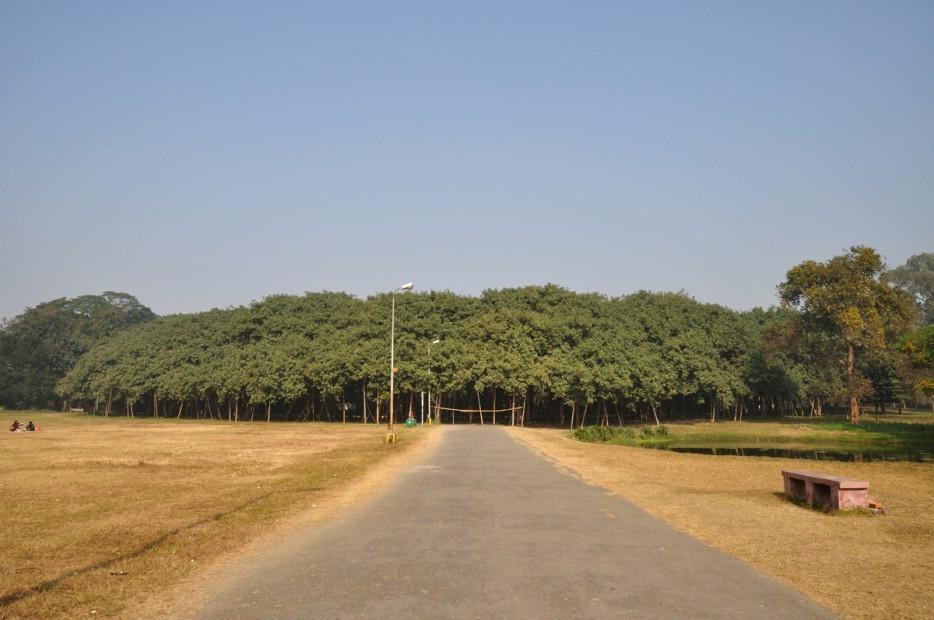 forests37 Леса с другой планеты!