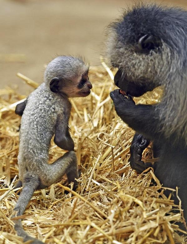luchshie foto zhivotnyx v avgust 7 Лучшие фотографии животных со всего мира за неделю