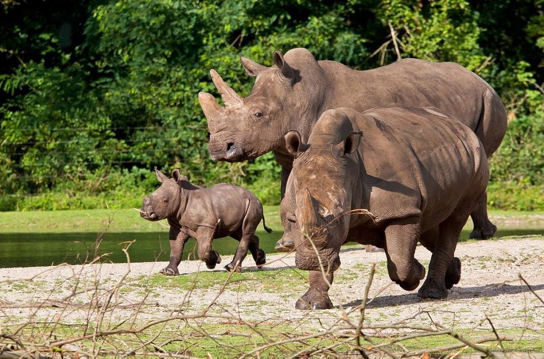 luchshie foto zhivotnyx v avguste 10 Лучшие фотографии животных со всего мира за неделю