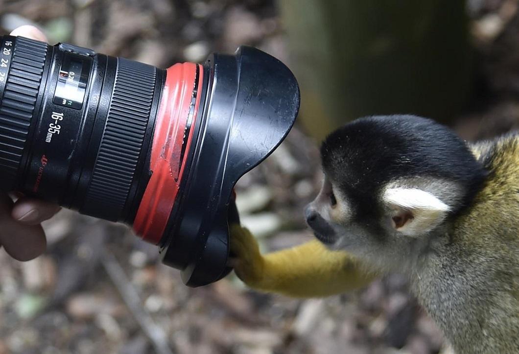 luchshie foto zhivotnyx v avguste 11 Лучшие фотографии животных со всего мира за неделю