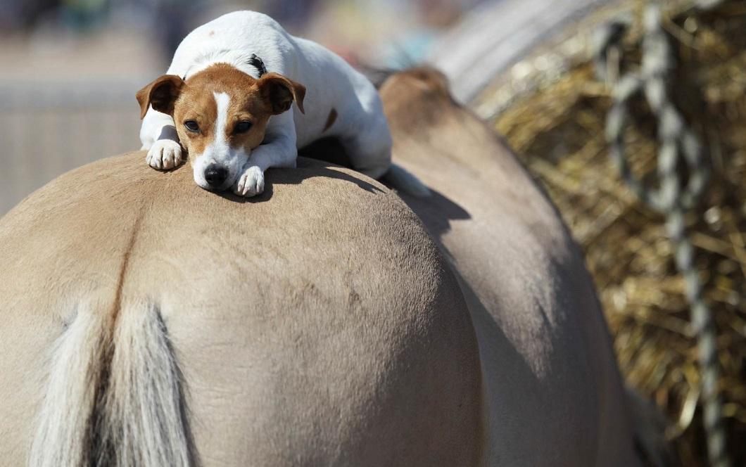 luchshie foto zhivotnyx v avguste 2 Лучшие фотографии животных со всего мира за неделю